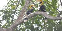 Khao-Yai-Bird-Watching-One-Day-01