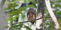 Khao-Yai-Bird-Watching-One-Day-03