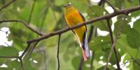 Khao-Yai-Bird-Watching-One-Day-04