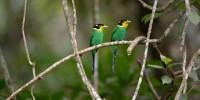 Khao-Yai-Bird-Watching-One-Day-05
