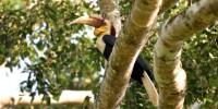 Khao-Yai-Bird-Watching-One-Day-07