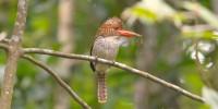 Khao-Yai-Bird-Watching-One-Day-09