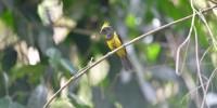 Khao-Yai-Bird-Watching-One-Day-10