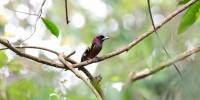 Khao-Yai-Bird-Watching-One-Day-14