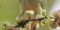 Khao-Yai-Bird-Watching-One-Day-15