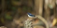 Khao-Yai-Bird-Watching-One-Day-20