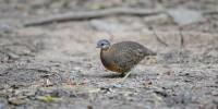 Khao-Yai-Bird-Watching-One-Day-23