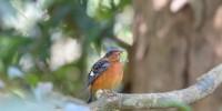 Khao-Yai-Bird-Watching-One-Day-24