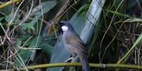 Khao-Yai-Bird-Watching-One-Day-25