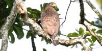 Khao-Yai-Bird-Watching-One-Day-26