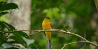 Khao-Yai-Bird-Watching-One-Day-27